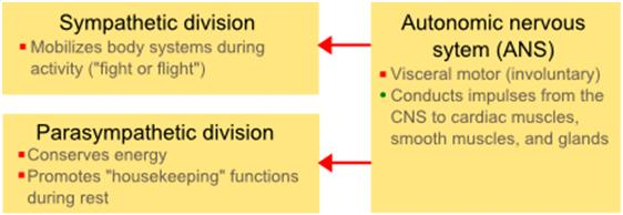 The missing piece in designing your training program the autonomic what ccuart Choice Image