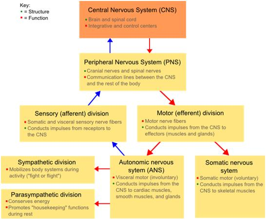 The missing piece in designing your training program the autonomic the ans ccuart Choice Image